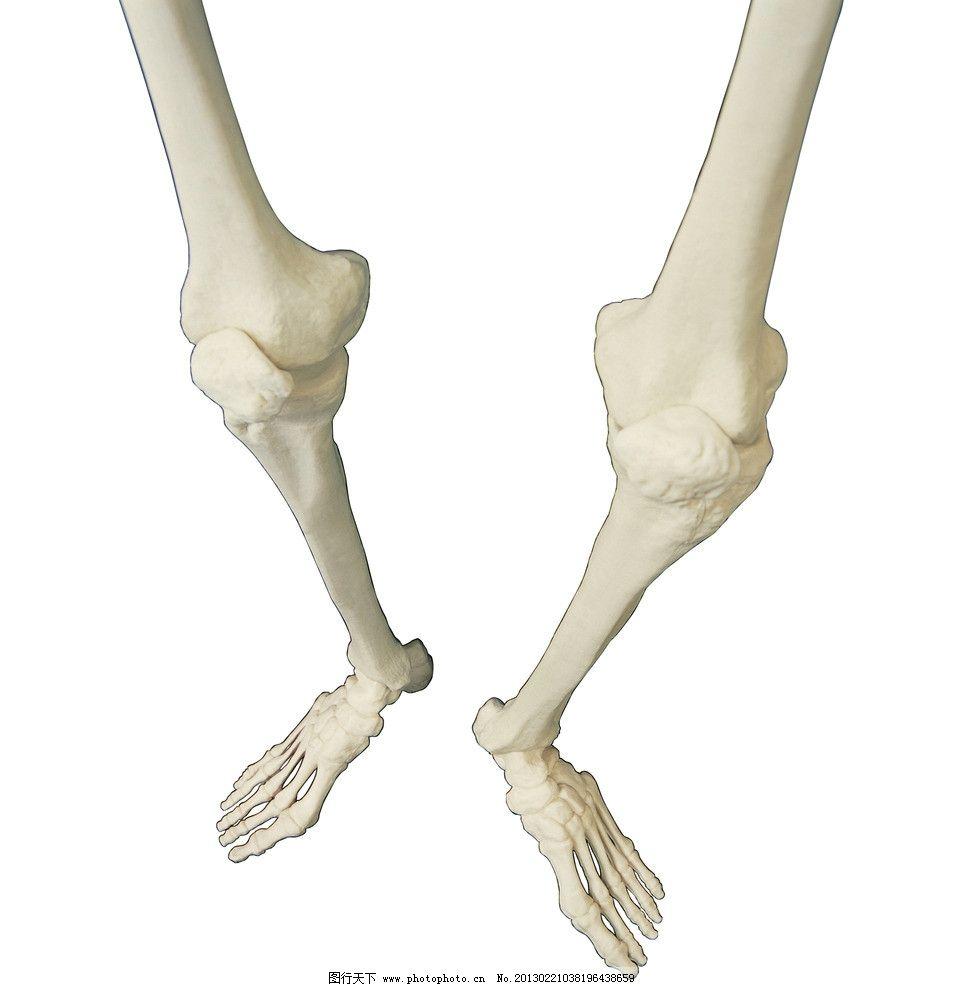 人体骨骼 骨头 脚骨 腿骨 人骨骼 摄影