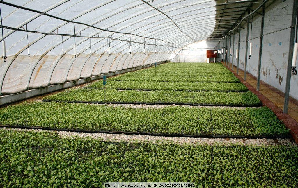大棚蔬菜 大棚种植 蔬菜种植 阳光大棚 蔬菜基地 农业生产 现代科技