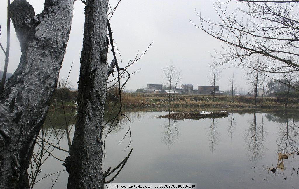 融雪后的河边 融雪 河边 枯草 枯树 树枝 风景摄影 自然风景 自然景观