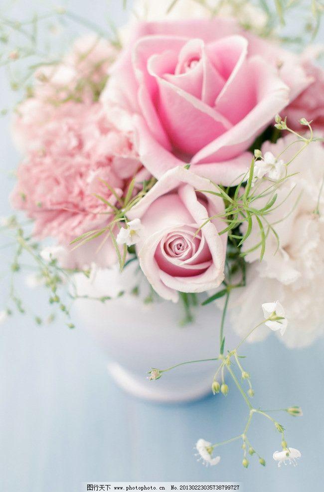 玫瑰花 鲜花 花朵 玫瑰 美丽花朵 花草 粉红色 生物世界 摄影 300dpi