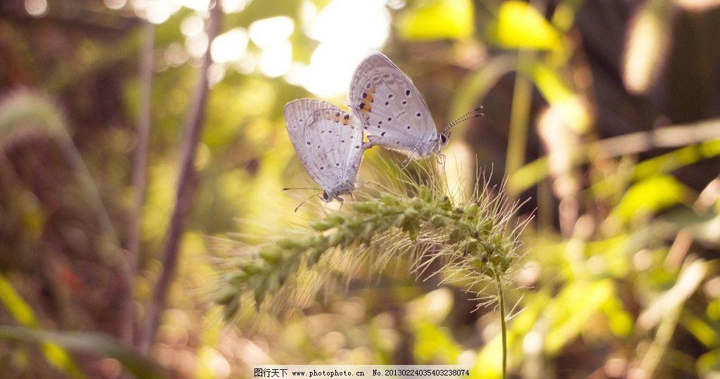 风景 素材/两小无猜 蝴蝶图片
