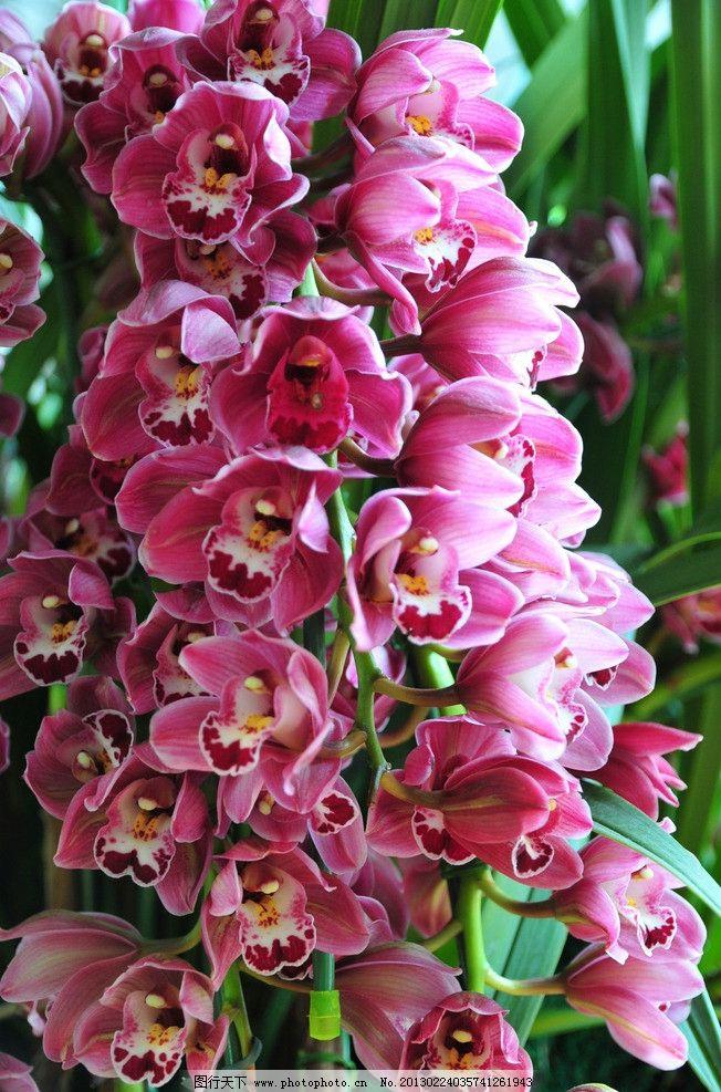 花 植物图片