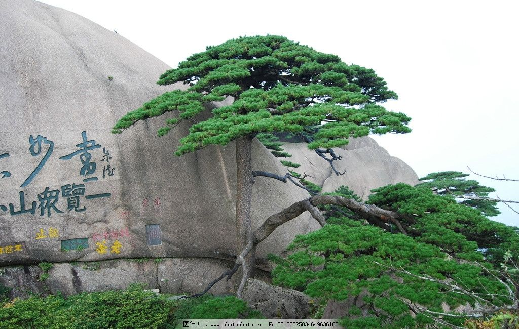 黄山迎客松 小景 松树