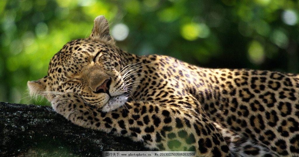豹子 动物 森林 树林 花豹 花纹 恐惧 肉食动物 野生动物世界