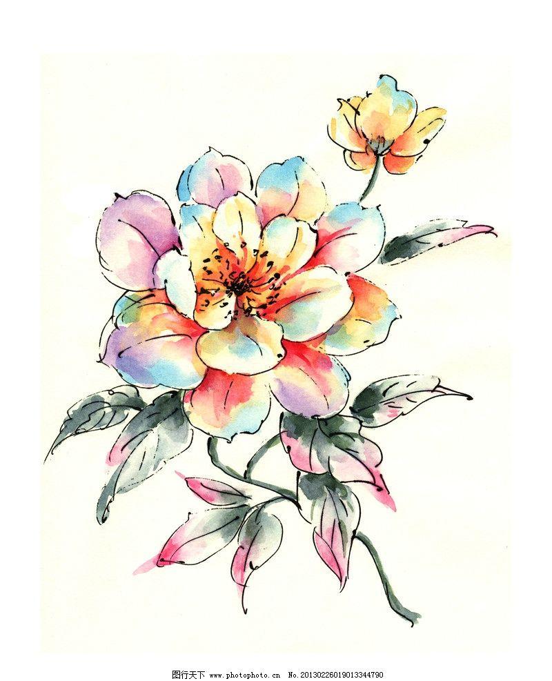 手绘花卉 手绘 花朵 花卉