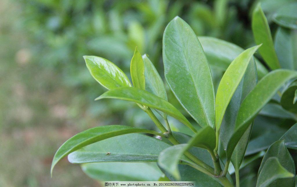 叶子 绿色 绿叶 树木树叶 生物世界 摄影 叶子特写 300dpi jpg