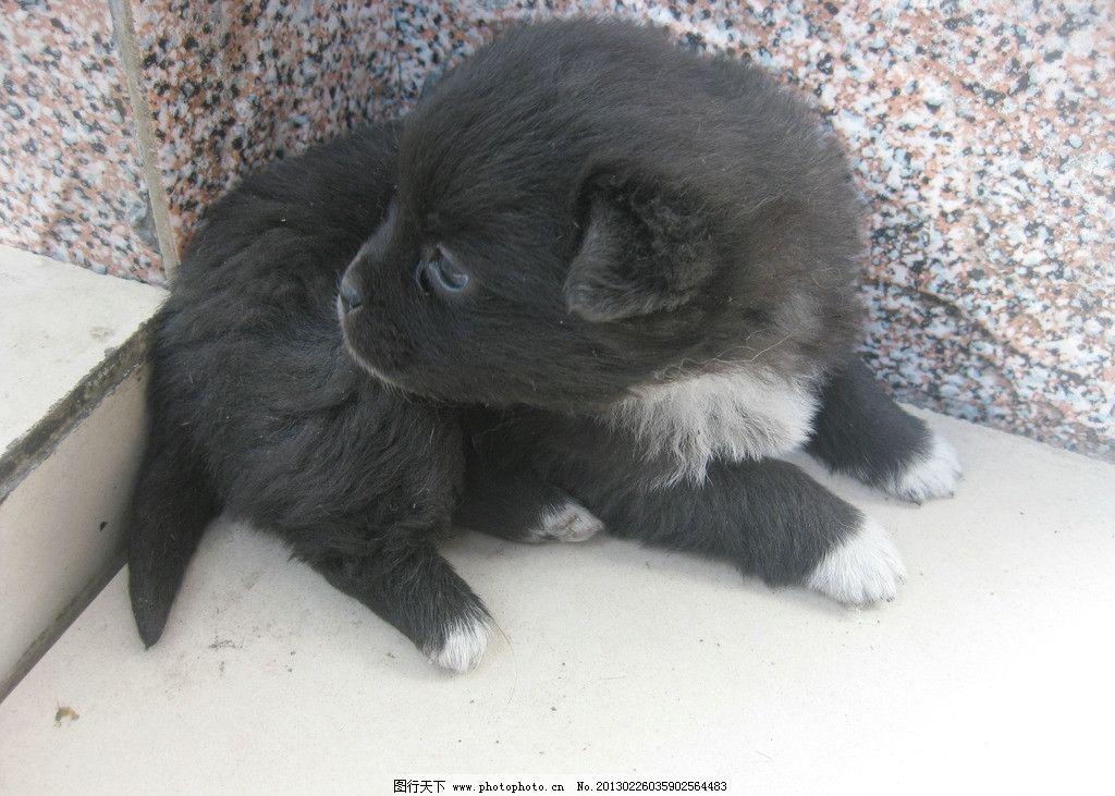 小狗 小狗狗 狗宝宝 黑狗 小黑 宠物 可爱的小狗 可爱的动物