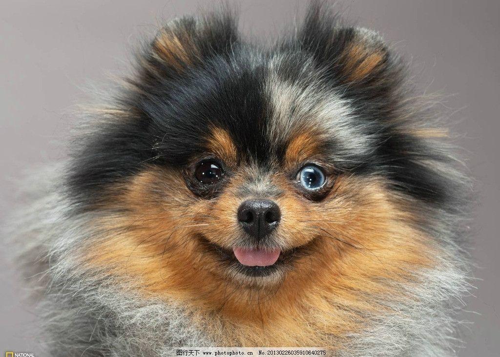 宠物狗 狗 宠物 眼神 可爱 动物 家禽家畜 生物世界 摄影 100dpi jpg
