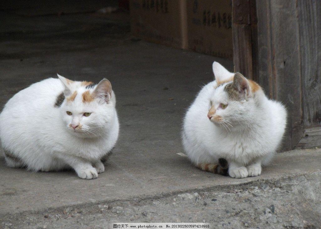 家猫图片大全可爱