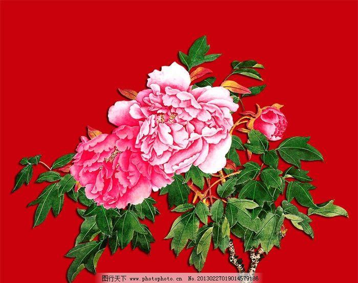 牡丹花 红牡丹 国画花鸟 粉色牡丹花 牡丹水彩画 盛开牡丹 牡丹花工笔