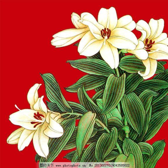 百合花 百合 白百合 鲜花 花朵 淡彩百合 花瓣 装饰花 相框花 国画