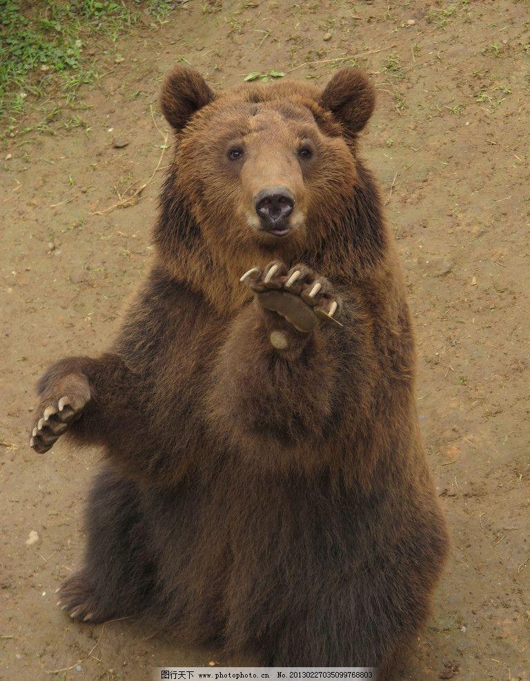 黑熊 动物 动物园 表情 野生动物 生物世界 摄影