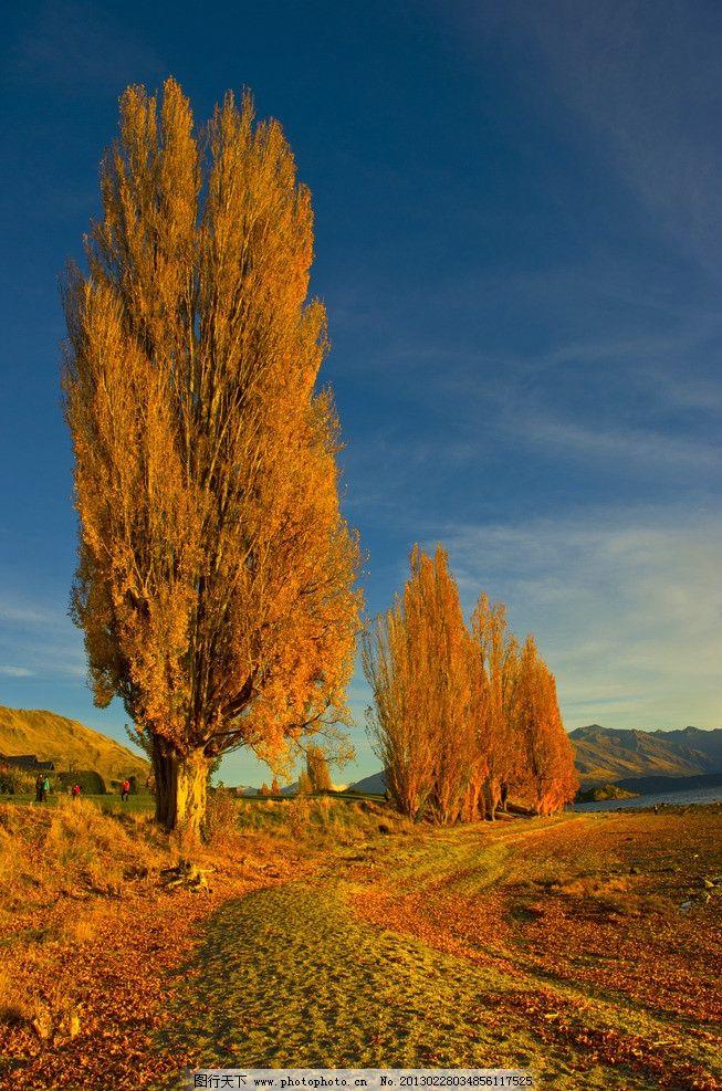 秋树 秋天风景 树木 草丛 树叶 自然风景 自然景观 摄影 240dpi jpg