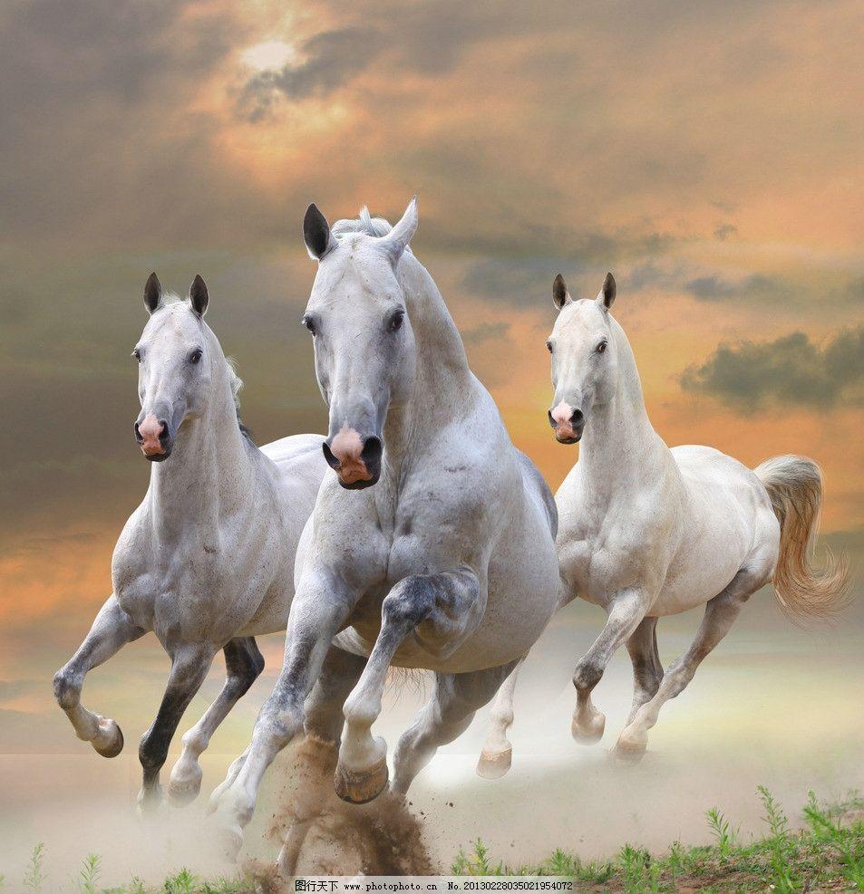 骏马 奔跑 骏马奔腾 沙层      千里马 快马 摄影 高清 动物摄影 野生