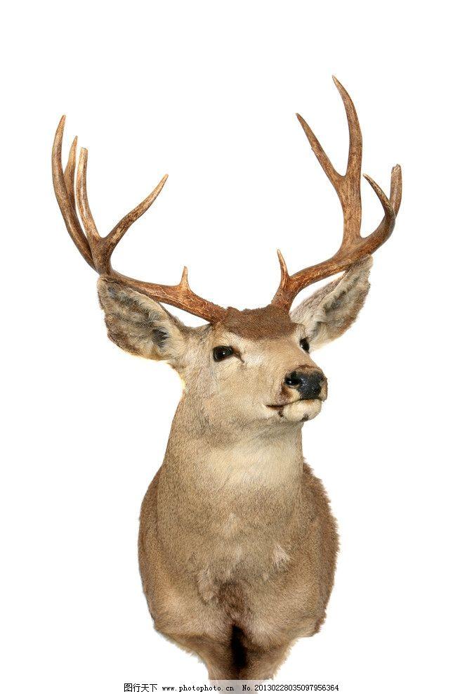 鹿的拼贴画