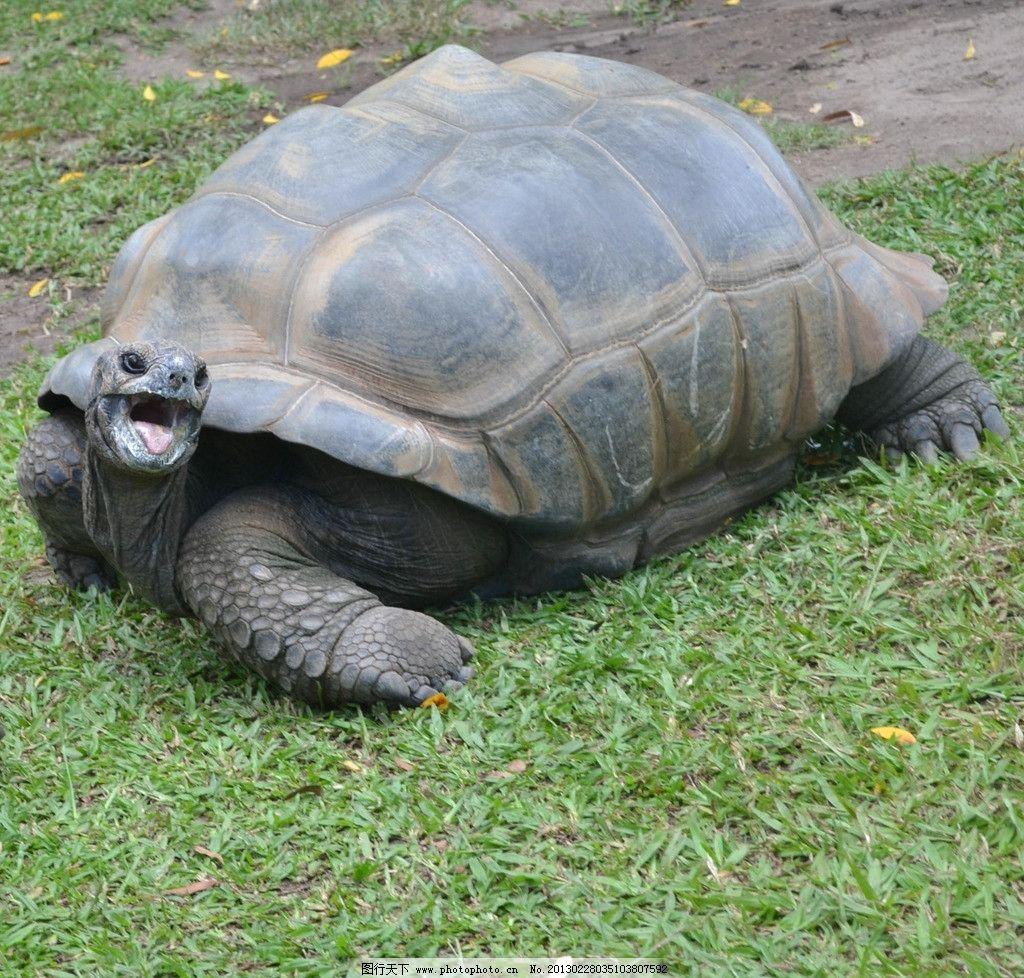 千年乌龟 澳大利亚 动物园 大乌龟 昆士兰 海洋生物 生物世界