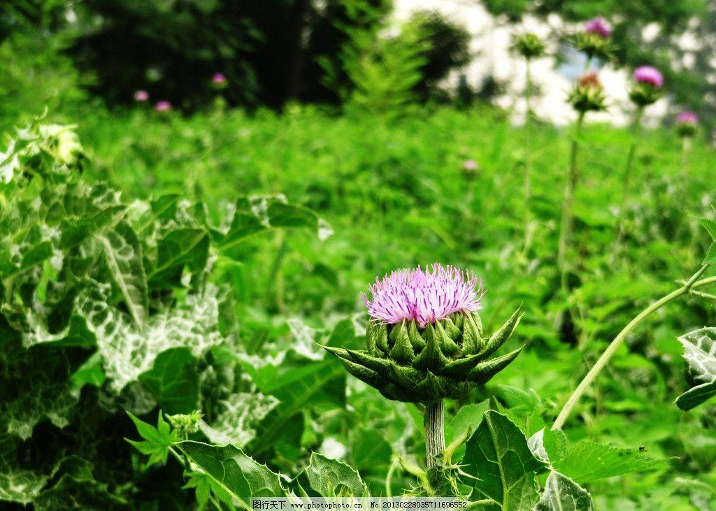 风景花草图片大全大图,花草图片大全唯美头像,盆栽植物图片及名称图片