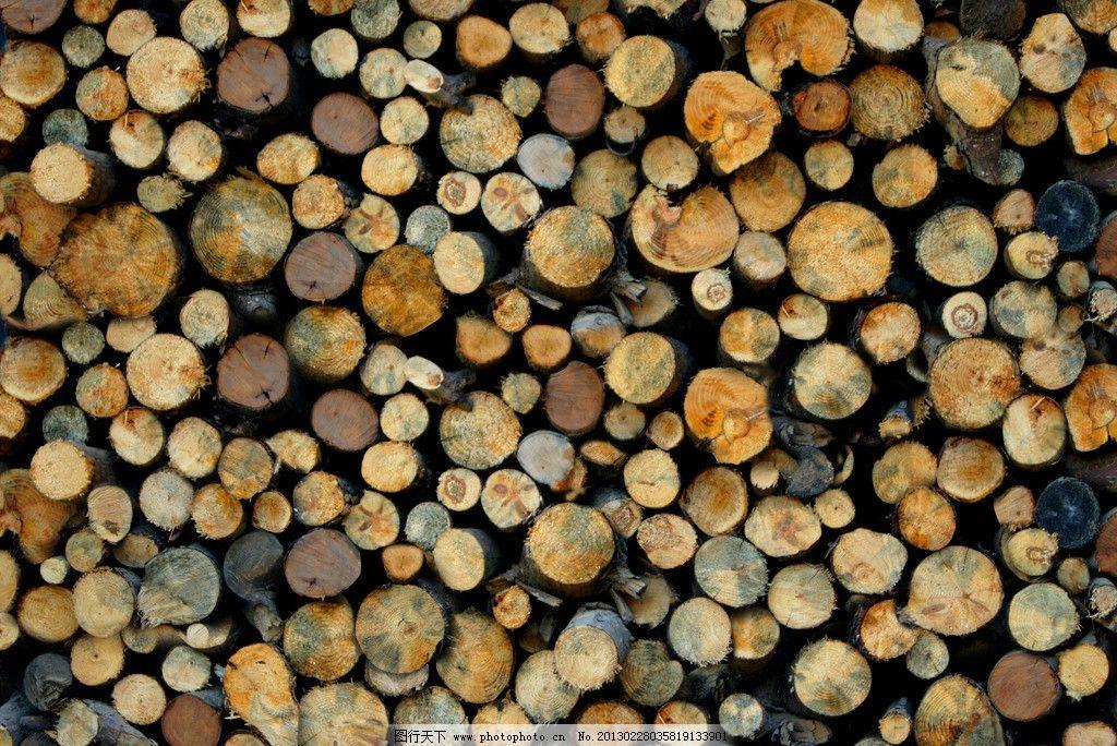 木头 木纹 切面 生活素材 生活百科 树木树叶 生物世界 摄影 350dpi