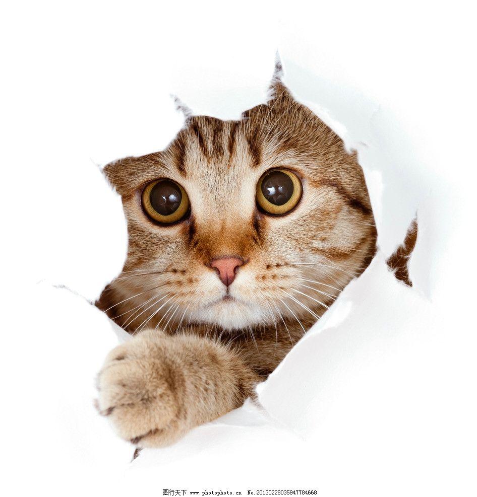 猫咪 猫 猫科动物 摄影 高清摄影 商业摄影 创意摄影 宠物摄影 家禽