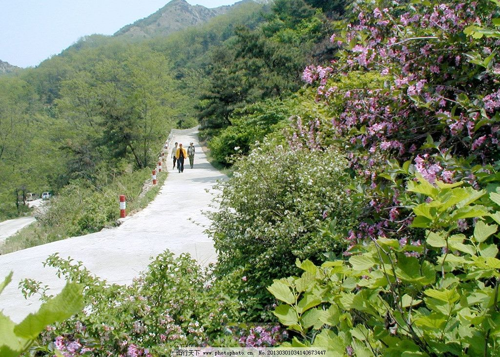 牙山风光 大山 野花 绿树丛丛 山间小路 自然风景 旅游摄影 摄影 375