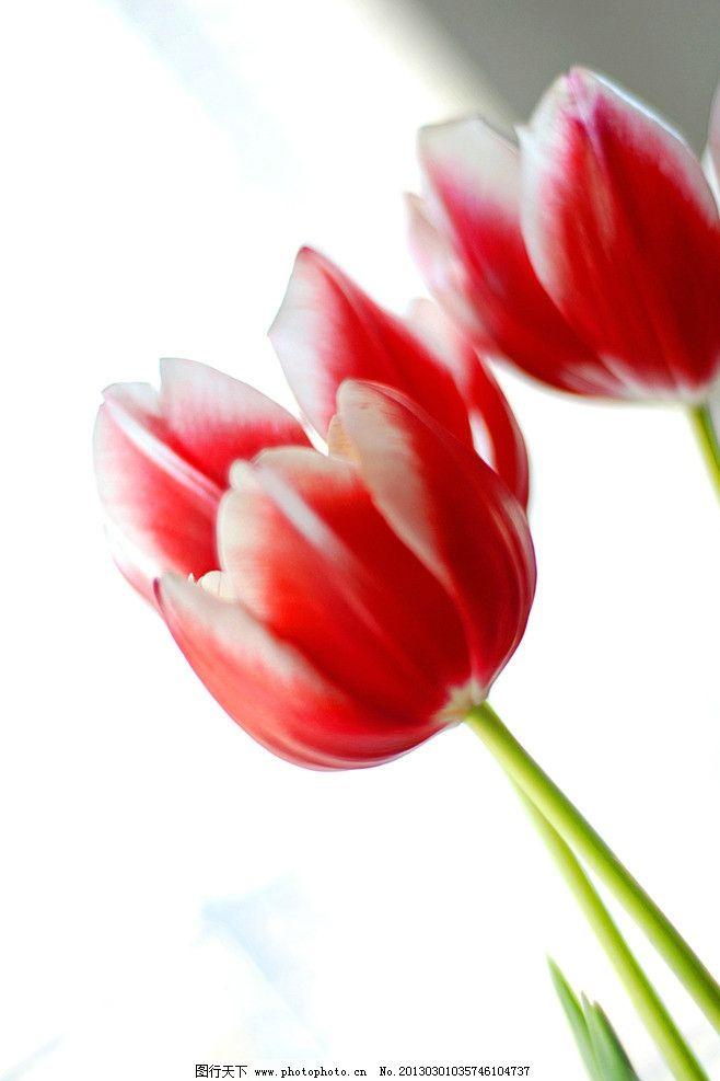 郁金香叶子的折法步骤图解