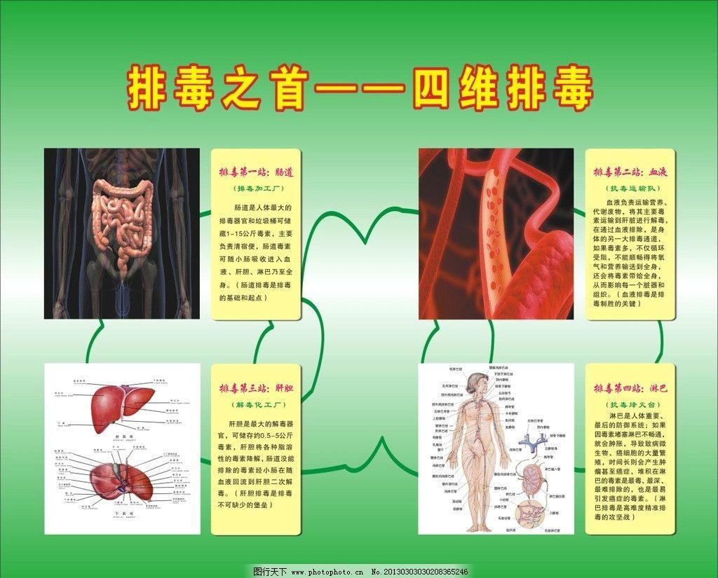 排毒之首 四维排毒 肠胃 人体 人体结构图 肝脏 矢量