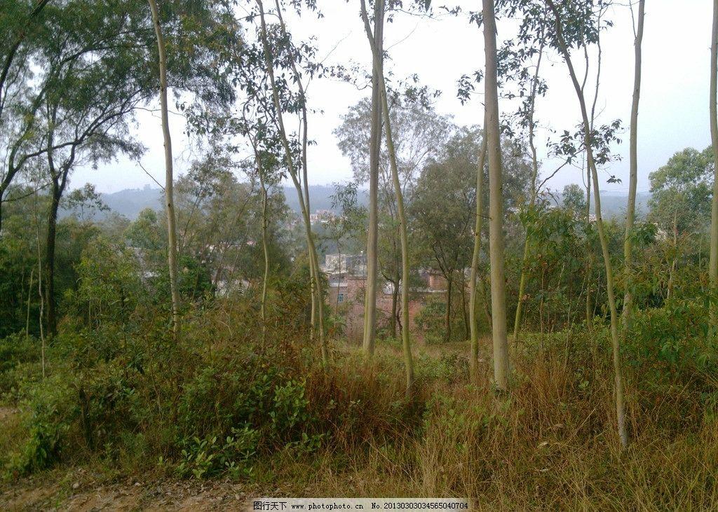 山上风景 树木 树林 绿色植物 田园风光 自然景观 摄影 72dpi jpg