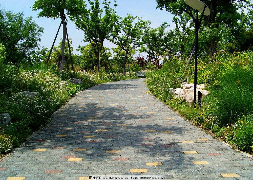 生态公园 树林 小路 大树 草地 公园 自然风景 自然景观 摄影 300dpi