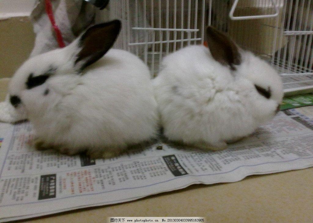 小兔子 兔宝宝