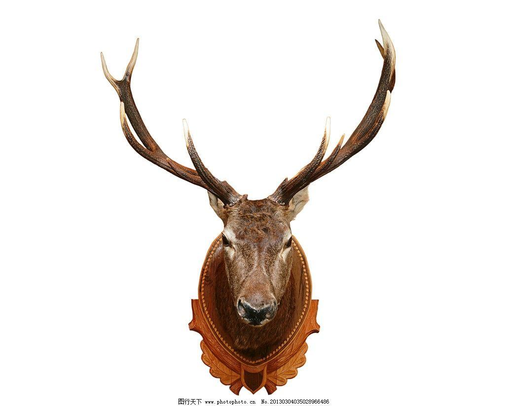 野生鹿 非洲鹿 野生动物 草原动物 摄影 高清 非洲动物 动物摄影 生物