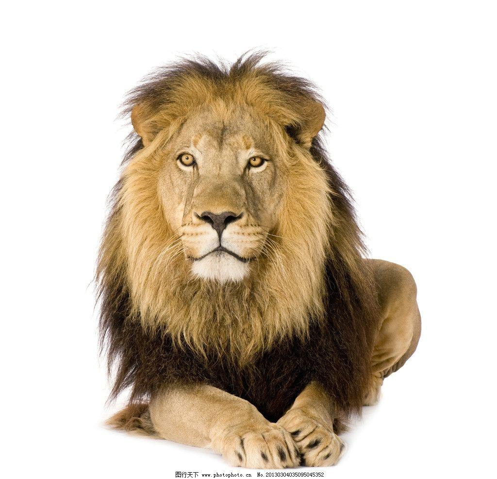 狮子 野生动物 草原动物 摄影 高清 非洲动物 动物摄影 生物世界 300d