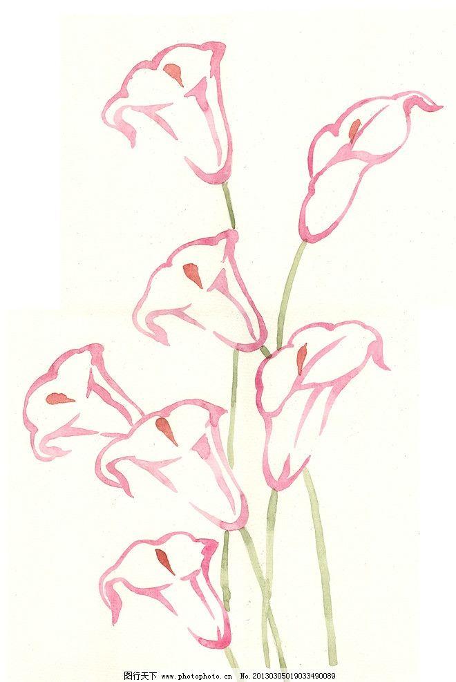 手绘花卉 花卉 马蹄莲