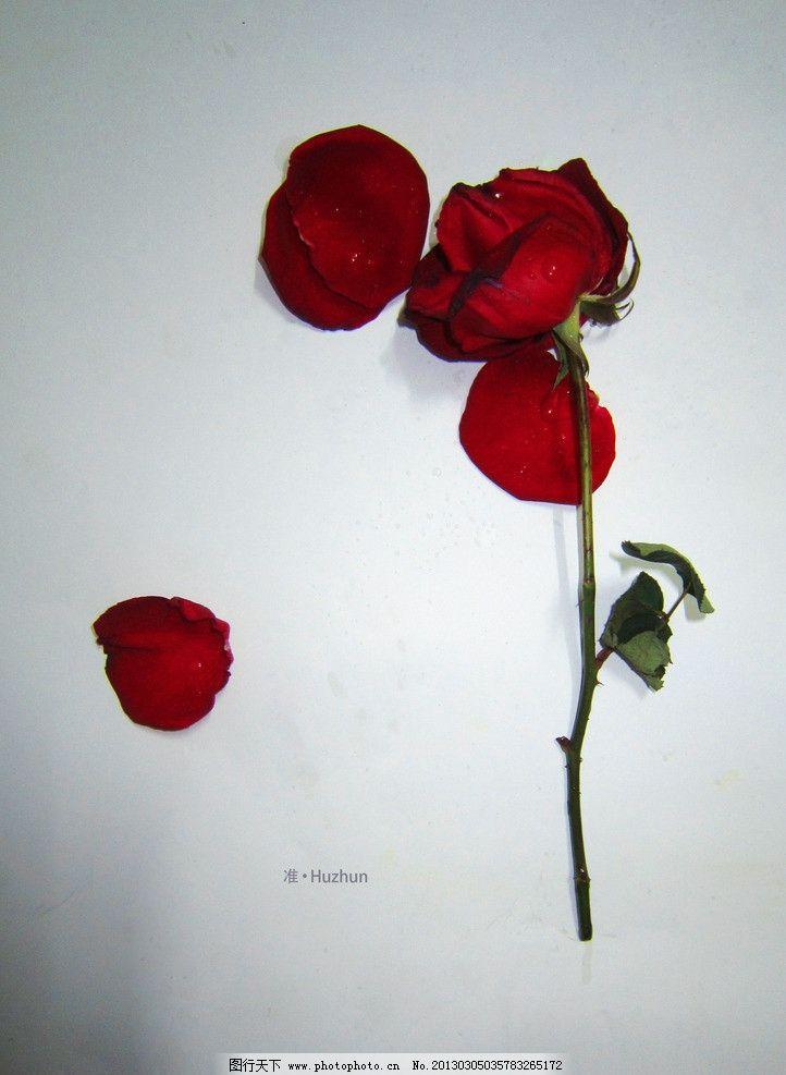 玫瑰前奏尤克里里简谱