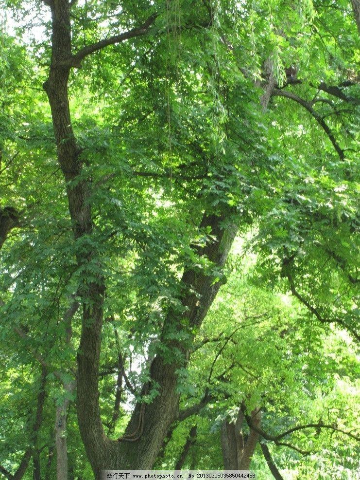 什么的树木_树木的意思-花卉是指什么-树木包括哪三类-树木与果树的区别-树 ...
