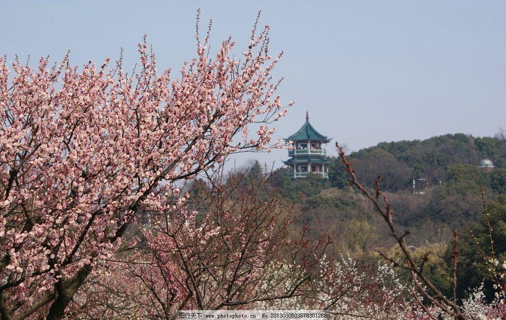 梅花蓝天宝塔梅园花春天春春色山绿树花草生物世界摄影