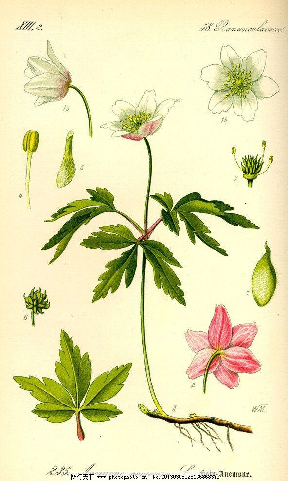 手绘彩色植物图谱图片