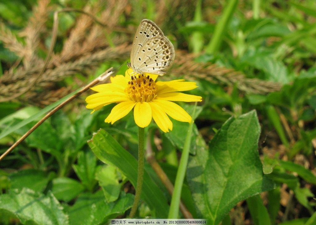 用黄色的卡纸画出春天蝴蝶小花