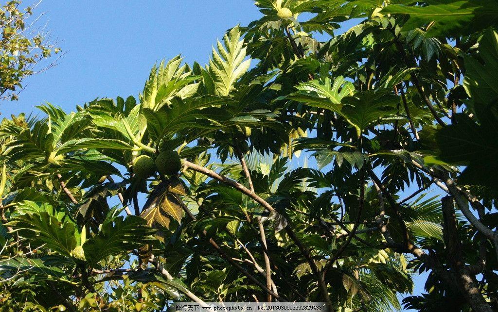 兴隆热带植物园 植物 绿色 叶子 三亚旅游 国内旅游 旅游摄影 摄影