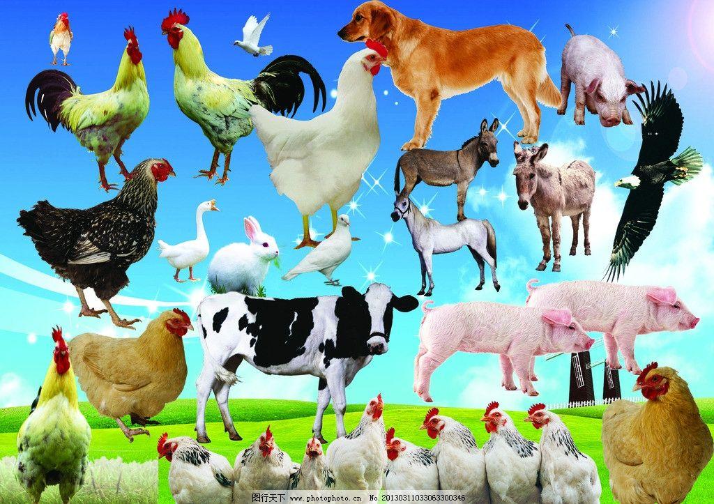 动物大全图片下载 动物大全 鸡 牛 鹰 猪 狗 鸽子 蓝天白云 背景 驴