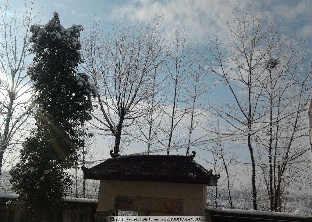 下雪 天空 雪山 雪松 雪树 鸟窝 树叶 树桠 树枝 门楣 摄影