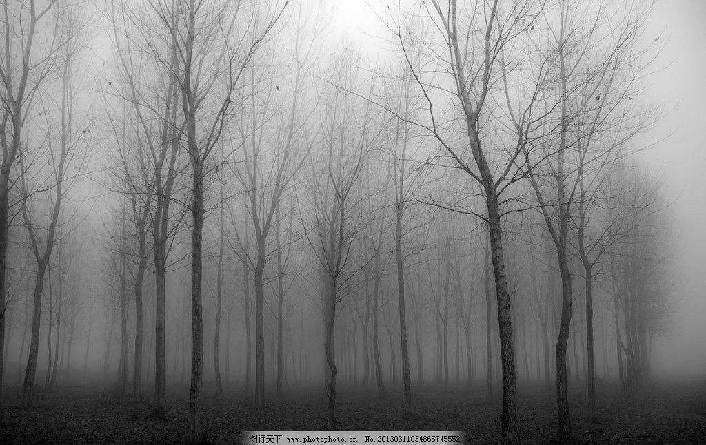 黑白树林 树枝 大雾 自然风景 自然景观 摄影 240dpi jpg