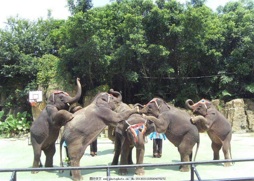 大象 大笨象 大象表演 表演 动物 动物园 黑色 野生动物 生物世界