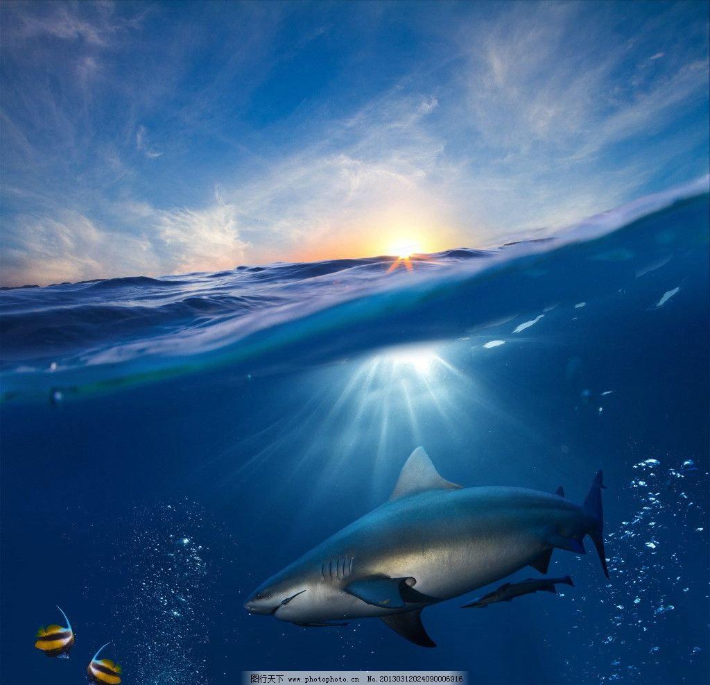 海浪鲨鱼图片