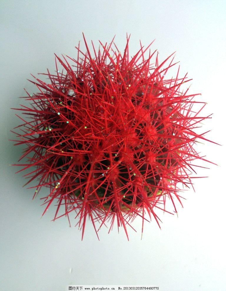摄影图库 生物世界 花草  仙人球 红仙人球 仙人掌 刺猬球 嫣红 鲜艳