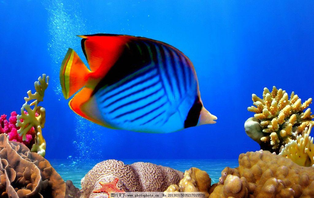 热带鱼 海洋 蓝色 珊瑚 贝壳 摄影图片