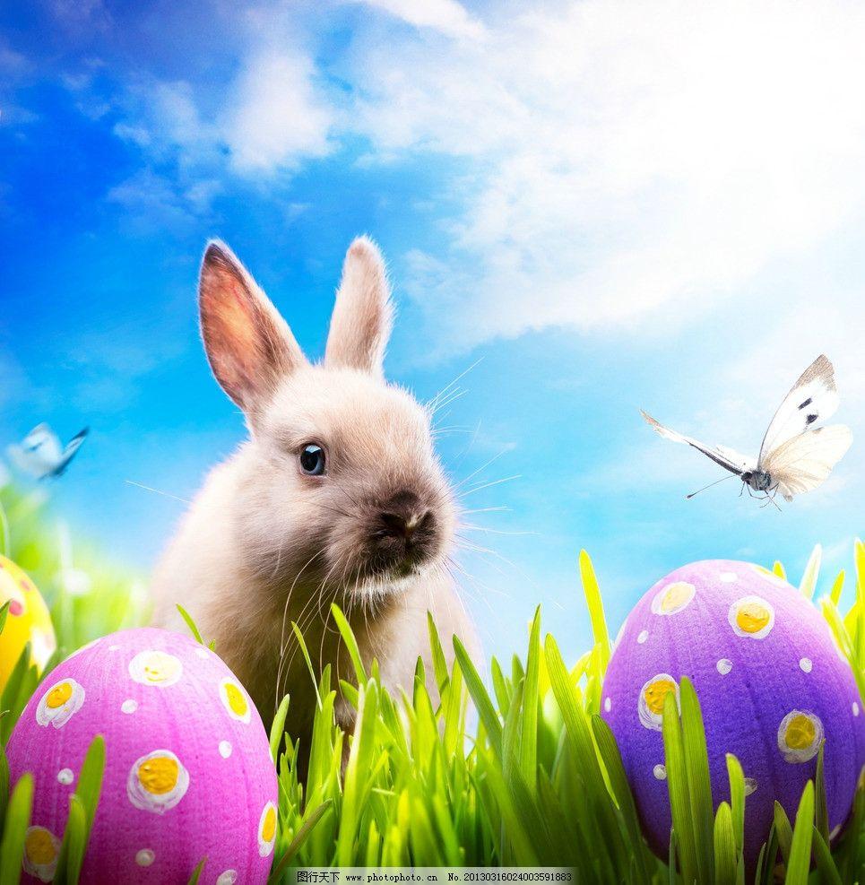 可爱小兔图片,彩蛋 蓝天白云 蝴蝶 绿草 高清图片-图