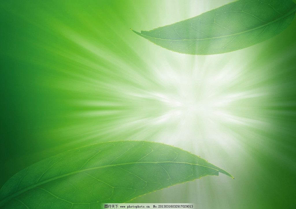 背景 壁纸 绿色 绿叶 树叶 植物 桌面 1024_723