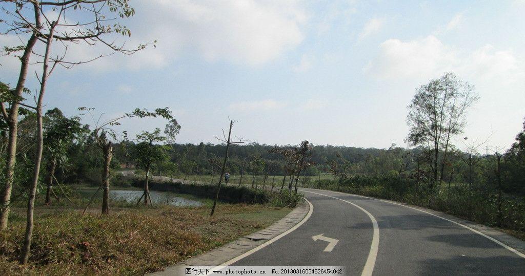 绿道 景区的公路 湛江森林公园 三岭山森林公园 霞山区 树木 树林