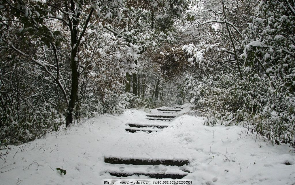 雪景 天空 森林 树木 树枝 树干 树叶 树丛 植物 雪天 枝头雪