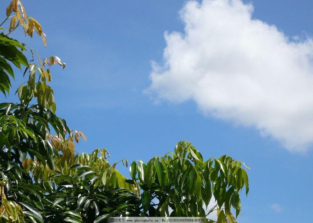 天空 蓝天 白云 树叶 树木树叶 生物世界 摄影 72dpi jpg